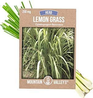 Lemon Grass Seeds for Planting Outdoor - 250 Mg Packet - Non-GMO, Heirloom Culinary Herb Garden Lemongrass Seeds - Cymbopo...