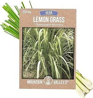 Lemon Grass Seeds for Planting Outdoor | 250 Mg Packet | Non-GMO, Heirloom Culinary Herb Garden Lemongrass Seeds | Cymbopogon flexuosus