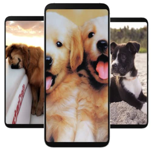 Top dogs wallpapers