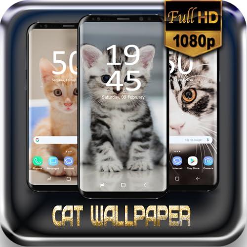Cat Cute Wallpaper