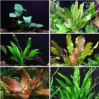 Rooted Live Aquarium Plant Bundle - 6 Easy Species | Snail Free Guaranteed