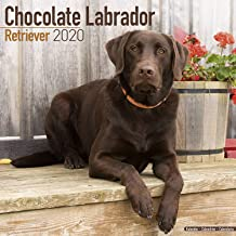 Best the chocolate lab Reviews
