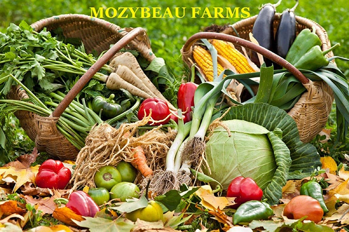 見捨てられた気性入札種子パッケージ:100種:サバイバル家宝の野菜&フルーツ種子庭ノンGMO/ハイブリッド有機種子ロット