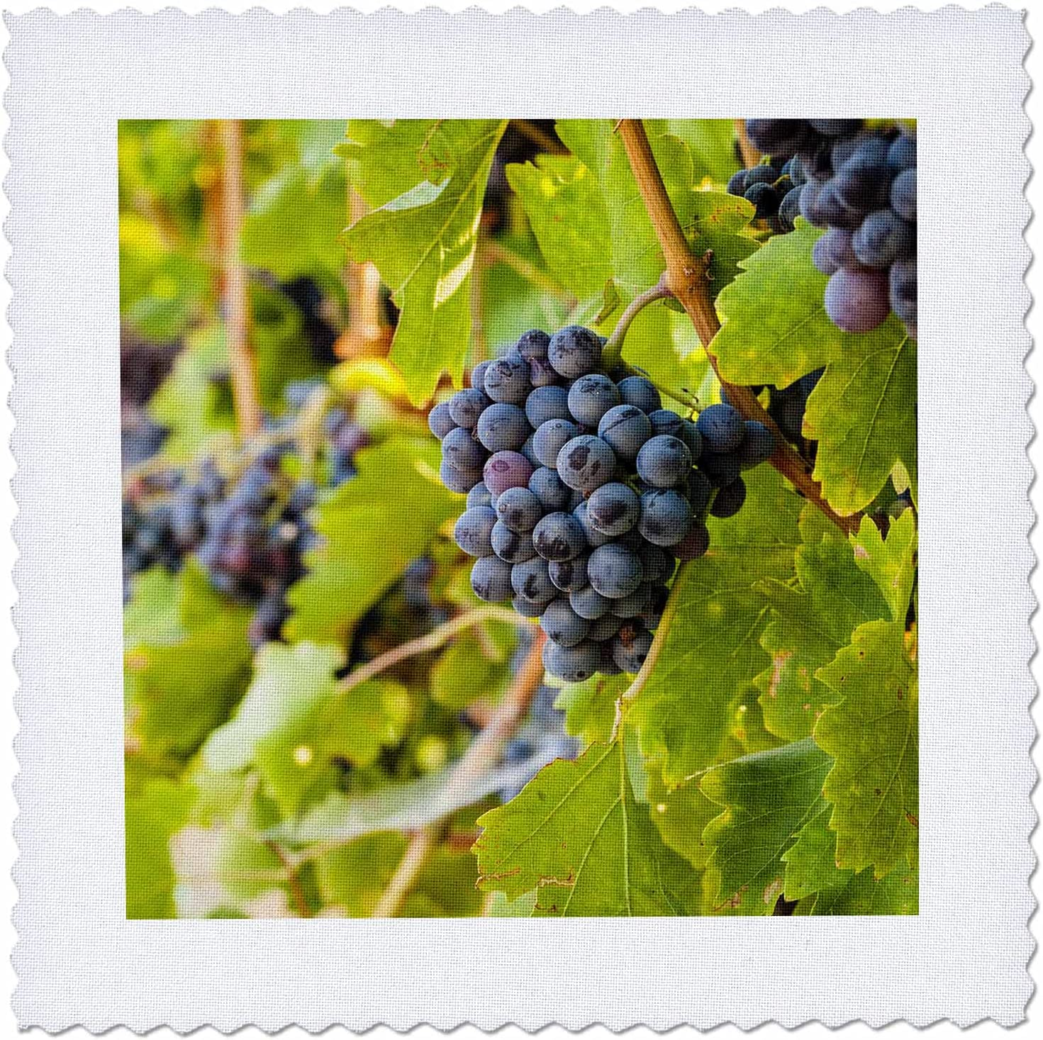 3dRose Clusters of Grenache grapes in a gift Valley WA viney Yakima Factory outlet