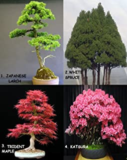Huge Bonsai Pack 12 Types oF Trees Over 120+ Seeds ! Rare + Growing Instruction