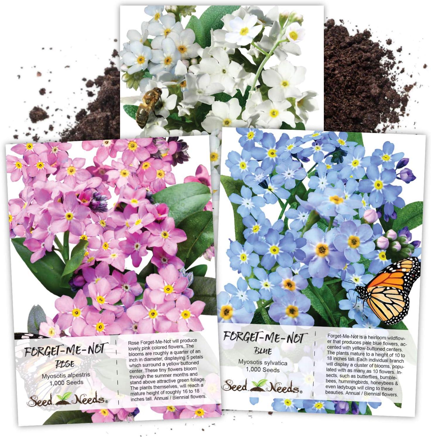 New life Seed Needs Heirloom Forget-Me-Not Collecti Flower Myosotis Spasm price