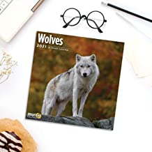 2021 Wolves Wall Calendar by Bright Day, 12 x 12 Inch, Cute Wild Animals Wolf