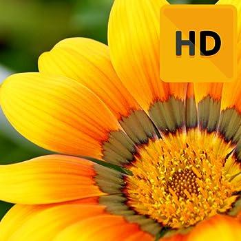 Best flower wallpaper hd Reviews