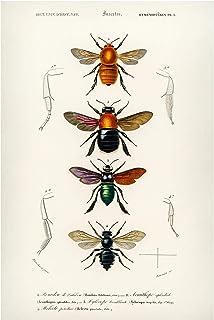 Bilderwelten Pizarra magnética - Vintage Board Insects 90x60cm