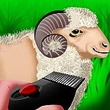 Wooly Sheep Shave : el día pastor cordero de afeitar para la cosecha de lana - Pro
