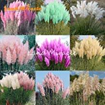 9 Colors 100 Mixed Seeds Pampas Grass Seeds Cortaderia selloana, Garden Flowers Bonsai Potted Plant Perennial Hardy Plant