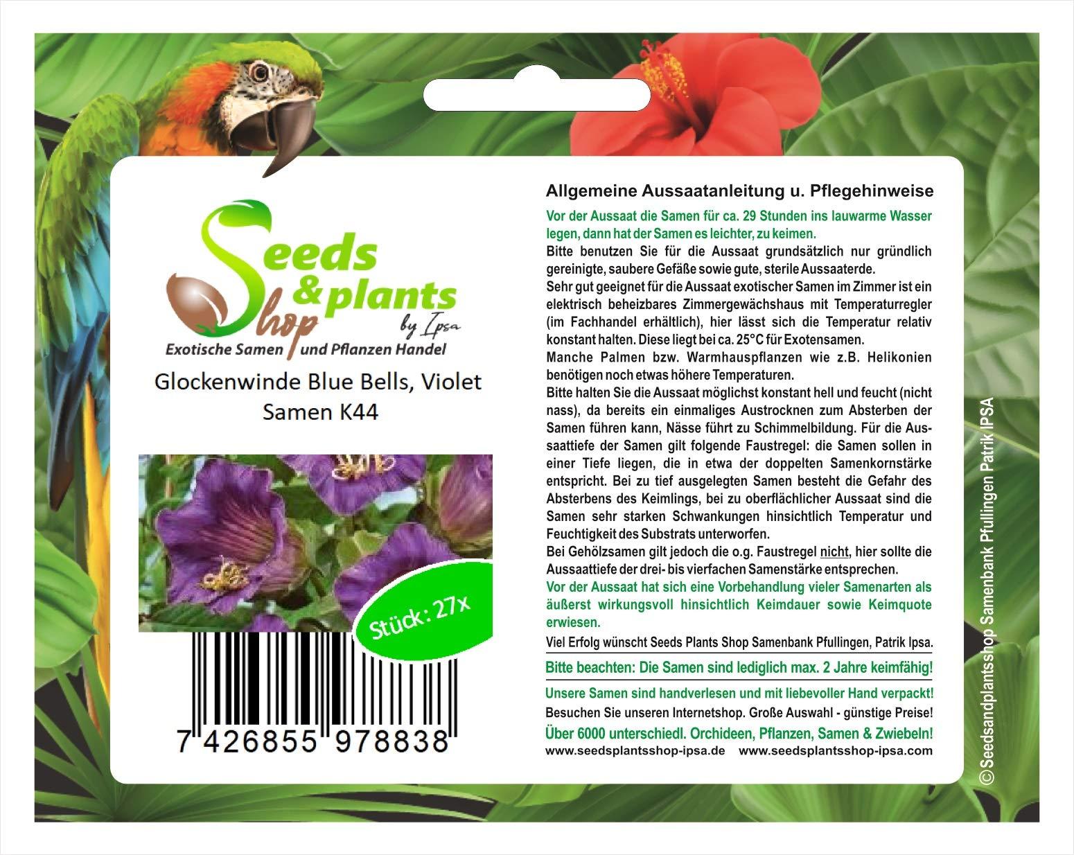 27 Bell vientos Blue bells semillas violeta jardín plantas flores semillas nuevas K44: Amazon.es: Jardín