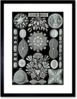 diatom art prints