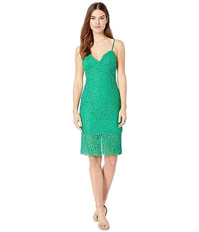 Bardot Sienna Lace Dress (Fern) Women