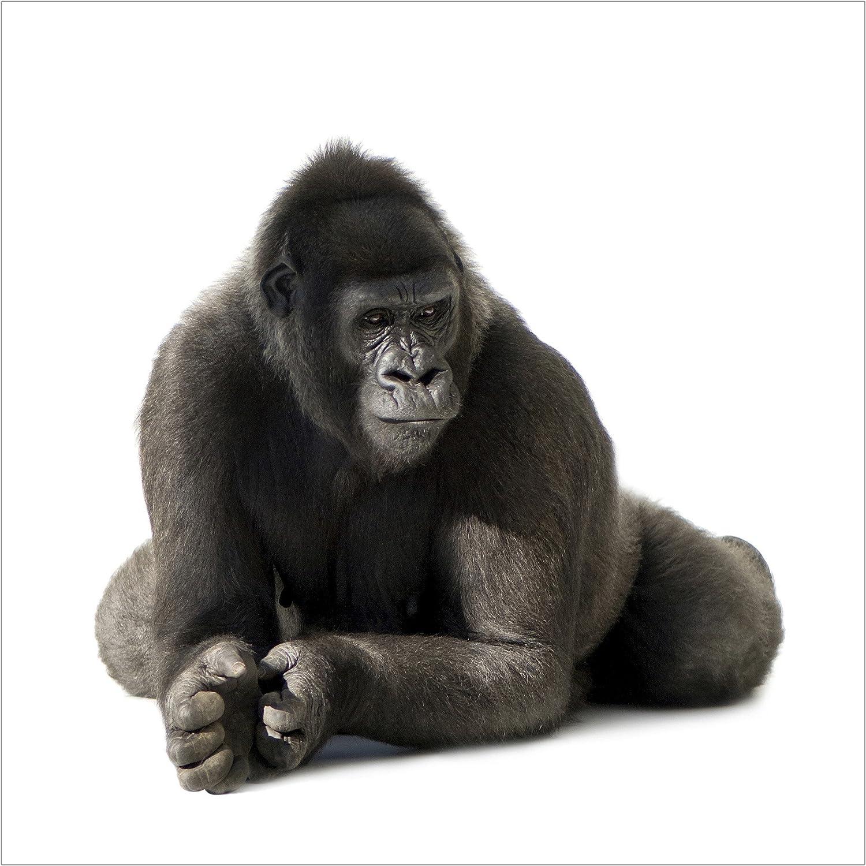 Vliestapete Vliestapete Vliestapete – Gorilla I – Wandbild quadratisch B00ZMWU1OQ 0d9edd