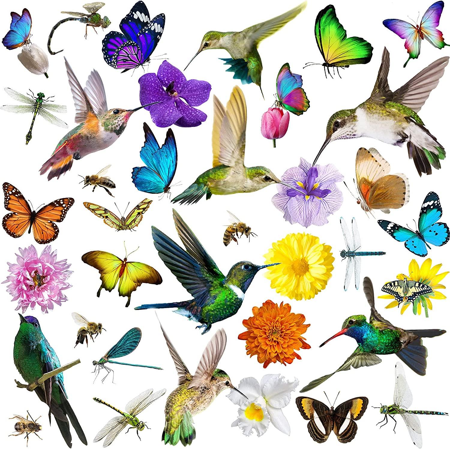 40 Pieces Hummingbird Butterfly Ranking TOP17 Flower Window Static Clings Bird Inexpensive