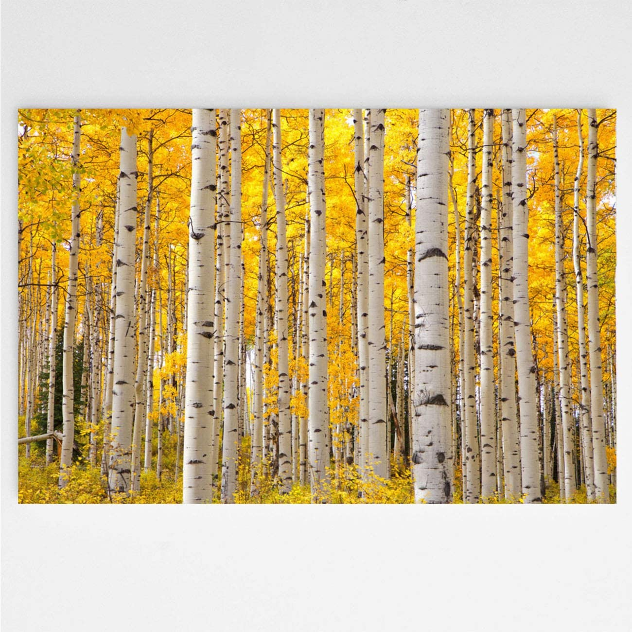 Trees Colorado Autumn Tree Canvas Wall Art Prints Picture Aspen Trees In Colorado On A Beautiful Autumn Day Focusing On The Tree Trunks With A Focus On The Wall Art Canvas Prints Wall Decor 24x36 In