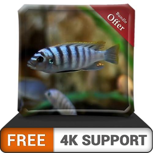 free white fish aquarium HD - dekorieren Sie Ihr Zimmer mit einem wunderschönen Aquarium auf Ihrem HDR 4K-Fernseher, 8K-Fernseher und Feuergeräten als Hintergrundbild, Dekoration für die Weihnachtsfer