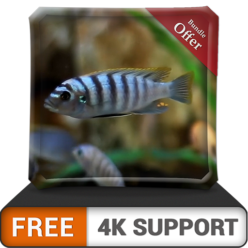 FREE White Fish Aquarium HD - Decor…