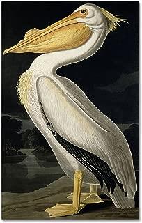 American White Pelican Artwork by John James Audubon, 22 by 32-Inch Canvas Wall Art