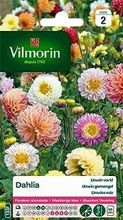 Vilmorin 5258442 Dahlia Multicolore