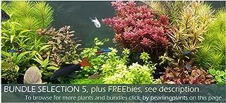 Bundle Selection 5, Live Aquarium Plants