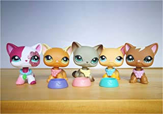 Best pictures of lps shorthair cats Reviews
