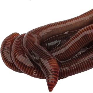 HomeGrownWorms.com - 100 Live Red Wigglers - Composting Red Worms - Live Delivery Guaranteed - Same Day Shipping!!! Vermic...