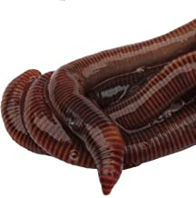 HomeGrownWorms - 250 Live Red Wigglers - Composting Red Worms - Live Delivery Guaranteed - Same Day Shipping!!! - Vermicomposting Garden Red Wrigglers - Eisenia Fetida - Worm Farm Starter