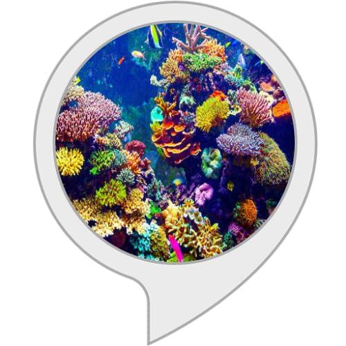 curiosidades del acuario marino