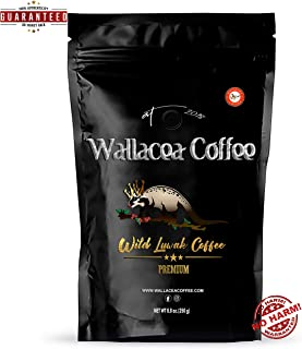 Wallacea Coffee Wild Kopi Luwak Coffee Beans, Gayo Sumatra Indonesia, 250 grams (8.8 oz)