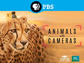 Nature: Animals with Cameras