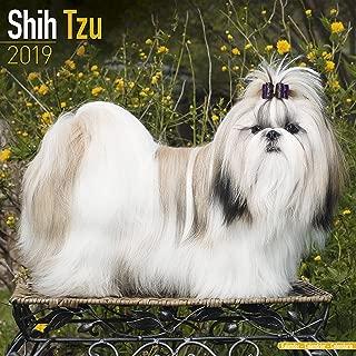 Shih Tzu Calendar - Dog Breed Calendars - 2018 - 2019 Wall Calendars - 16 Month by Avonside