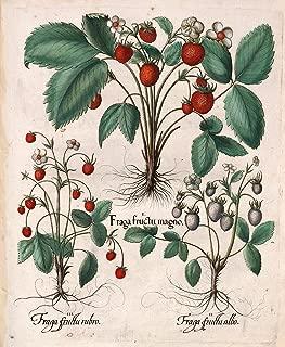 hortus eystettensis eichstatt 1613