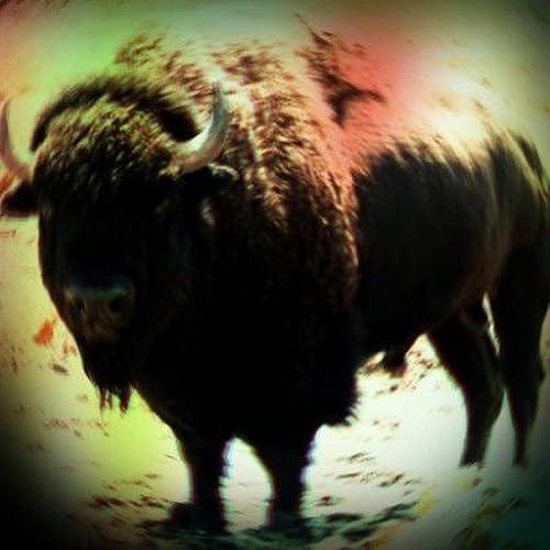 Buffalo Sounds
