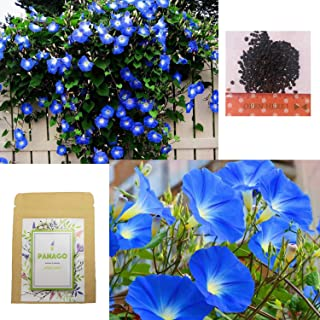 Amazon com: morning glory seeds