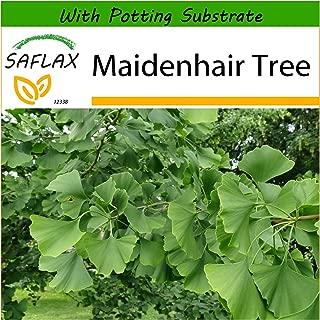 Best maidenhair tree seeds Reviews