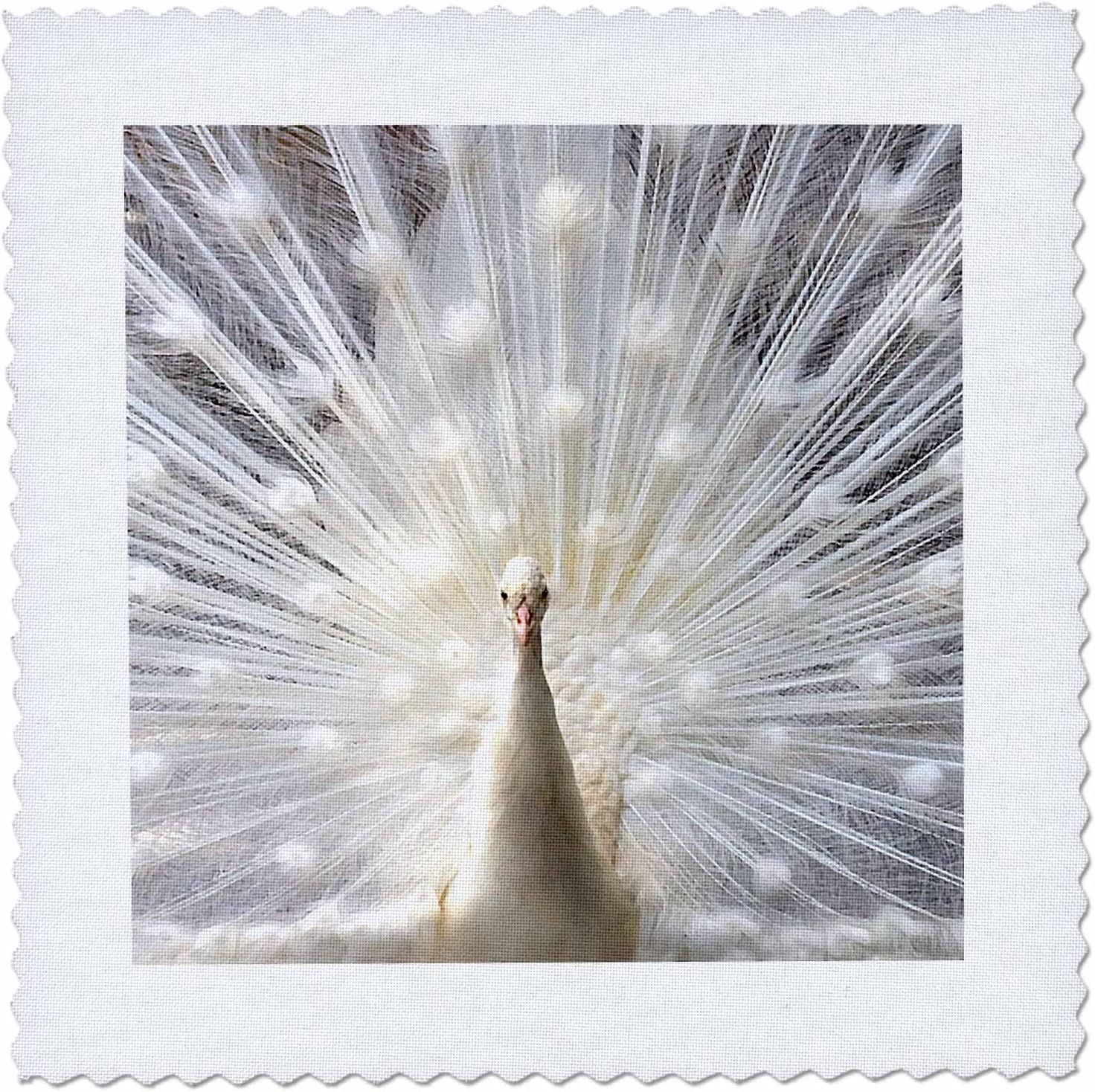 3dRose qs_4060_2 White Peacock Quilt Square, 6 by 6-Inch