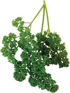 Burpee 60169A Organic Double Curled Parsley Seeds, 640