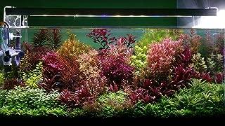 7 Species Live Aquarium Plants Package 25 Stems! rotala ludwigia+More Colorful