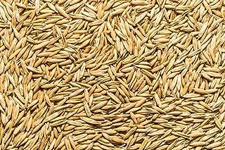 milky oat seed