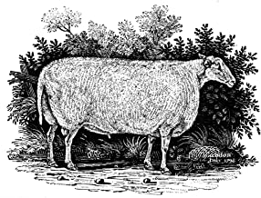 Posterazzi Poster Print Collection Sheep Teeswater Improved Breed. Wood Engraving, 1798, by Thomas Bewick, (18 x 24), Varies