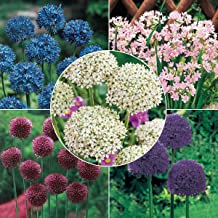 BRECK'S Carefree Allium Collection - Includes 80 Bulbs - Due to restrictions Can't Ship to ID or WA