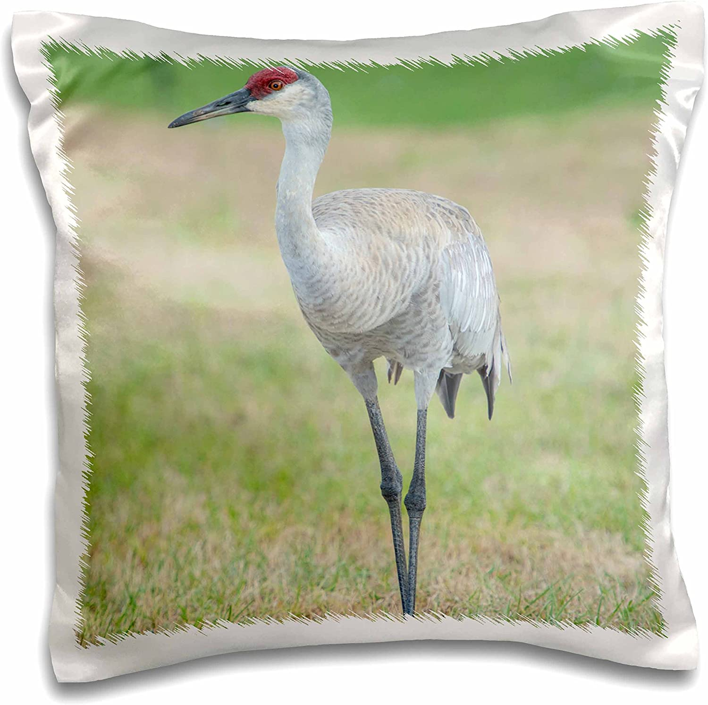 3drose Usa Florida Orlando Sandhill Crane Grus Canadensis Pillow Case 16 By 16 Pc 207592 1 Arts Crafts Sewing