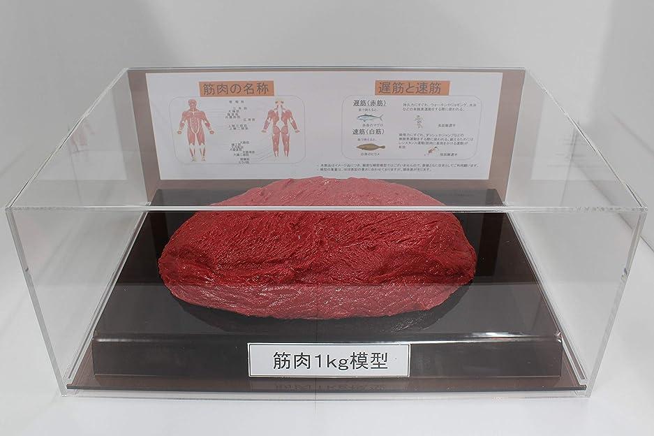 ディプロマどちらか名義で筋肉模型 フィギアケース入 1kg ダイエット 健康 肥満 トレーニング フードモデル 食品サンプル
