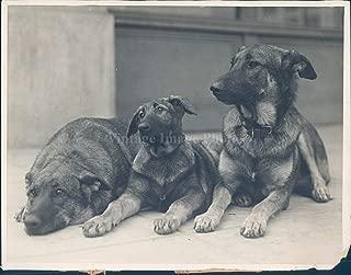 Vintage Photos Photo Lone Wolf Son Mitzi Gray Movie Education Dogs Animal Los Angeles 6x8