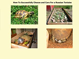 Best russian tortoise care videos Reviews