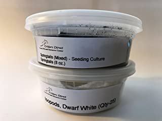 dwarf white isopods care