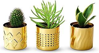 Folkulture Succulent Planters, Set of 3 - 3.2 Inches Small Pots for Plants, Modern Flower Pots for Succulents Plants Live,...