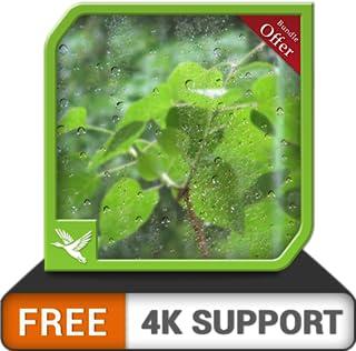 chuvas frondosas gratuitas HD - aproveite e relaxe com a cena chuvosa romântica na sua TV HDR 8k 4k e dispositivos de incêndio como papel de parede e tema de mediação e paz
